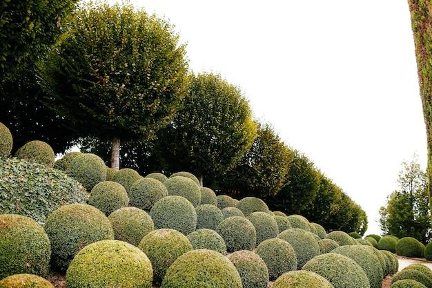 Ogród krajobrazowy z kulkami bukszpanu w pobliżu francji. zielone kule.
