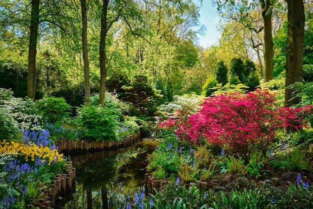 Ogród kwiatowy keukenhof. lisse, holandia.