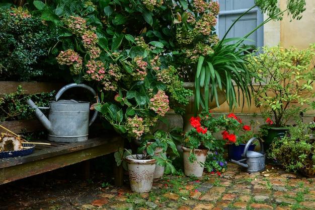 Ogród ozdobiony jesiennymi kwiatami, roślinami w doniczkach
