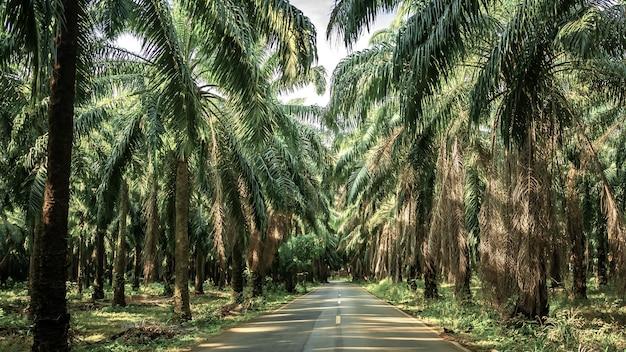 Ogród palmowy, sposób plantacji na plantacji palma w ogrodzie tropikalnym