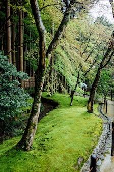 Ogród park drzewa w japonii