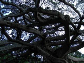 Ogród peradeniya, korzenie