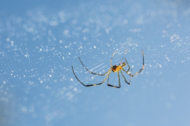 Ogród przyrody owadów szczegóły makro pająki