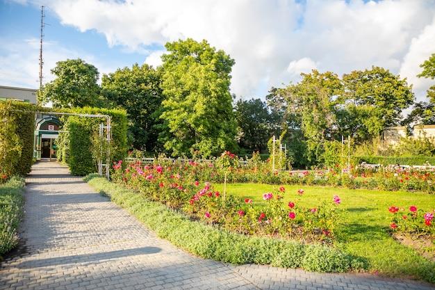 Ogród różany na wzgórzu petrin w pradze czechy