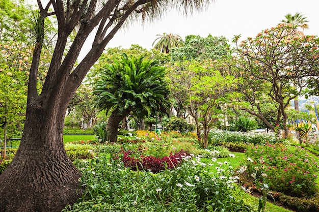 Ogród w mieście funchal, wyspa madera, portugalia