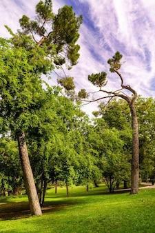 Ogród w parku publicznym z wysokimi sosnami i błękitnym niebem z chmurami.