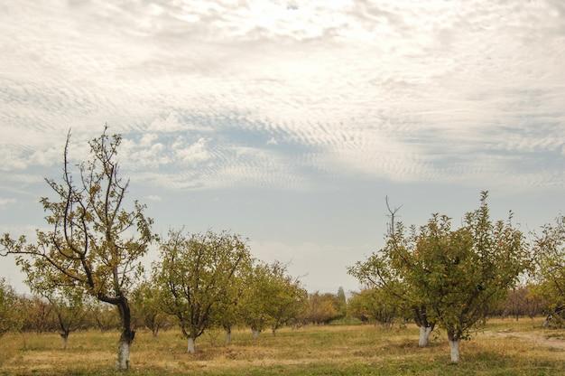 Ogród z drzewami owocowymi na tle nieba z chmurami