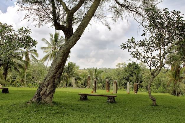 Ogród z kamieni i spokój miejsce relaksu w dżungli kamienna ławka palmy trawnik z trawą