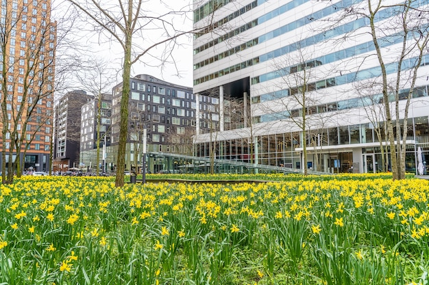 Ogród z wieloma żółtymi kwiatami polnymi w pobliżu wysokich drapaczy chmur