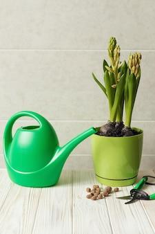 Ogrodnictwo domowe, pielęgnacja roślin doniczkowych, koncepcja ogrodu przydomowego