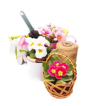 Ogrodnictwo: kwiaty pierwiosnka z rękawiczkami, kielnią i konewką na białym