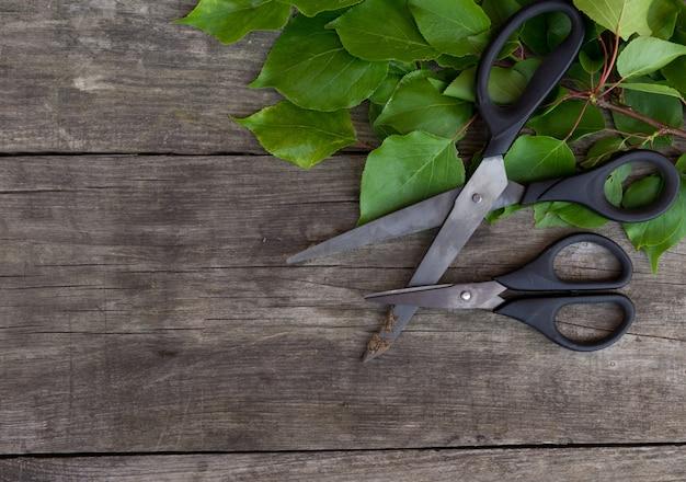 Ogrodnictwo nożyce i zieleni gałąź na wieśniaka stole. czas na ogrodnictwo