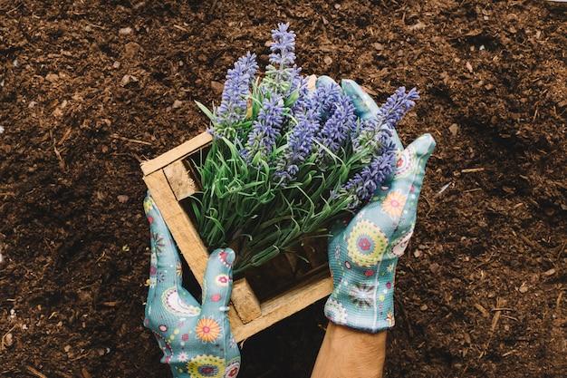 Ogrodnictwo pojęcia z rąk gospodarstwa drewniane pole kwiat