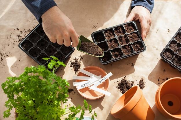 Ogrodnictwo, sadzenie w domu. człowiek siewu nasion w polu kiełkowania