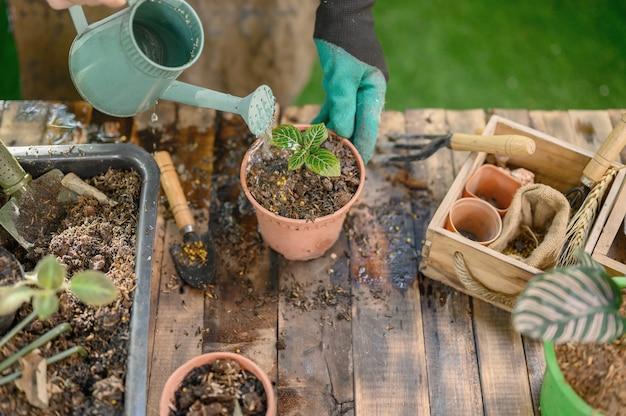 Ogrodnictwo w domu, gdy blokada i samodzielna kwarantanna. aktywność rekreacyjna w ogrodzie botanicznym podczas kryzysu koronowego. zostań w domu, aby odpocząć i zdystansować się.