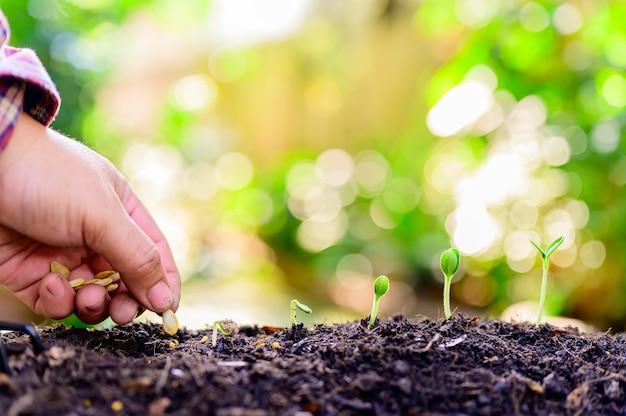 Ogrodnictwo w domu, gdy blokada i samodzielna kwarantanna. sadzenie drzew w ogrodzie botanicznym podczas kryzysu związanego z koronawirusem. zostań w domu, aby odpocząć i zdystansować się.