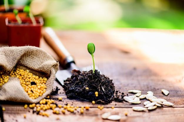 Ogrodnictwo w domu, gdy blokada i samodzielna kwarantanna. sadzenie nasion w glebie w ogrodzie botanicznym podczas kryzysu związanego z koronawirusem. zostań w domu, aby odpocząć i zdystansować się.