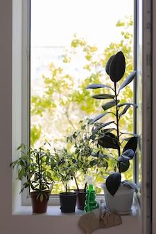 Ogrodnictwo w domu z roślinami