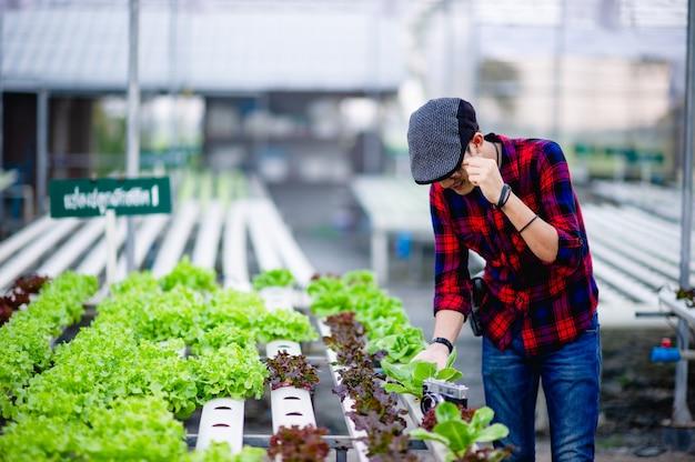 Ogrodnicy mężczyźni sałatka patrząc na sałatkę w swoim ogrodzie koncepcja tworzenia zdrowych działek warzyw