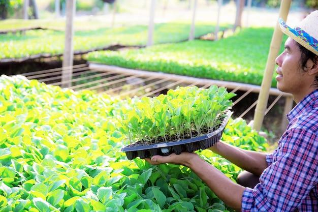 Ogrodnicy trzymają tace z warzywami.