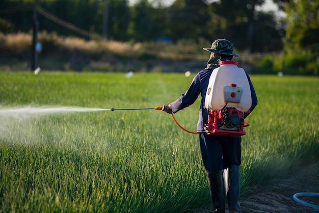 Ogrodnicy warzyw wolni od środków chemicznych, aby zapobiec szkodnikom, nawożeniu, pielęgnacji.