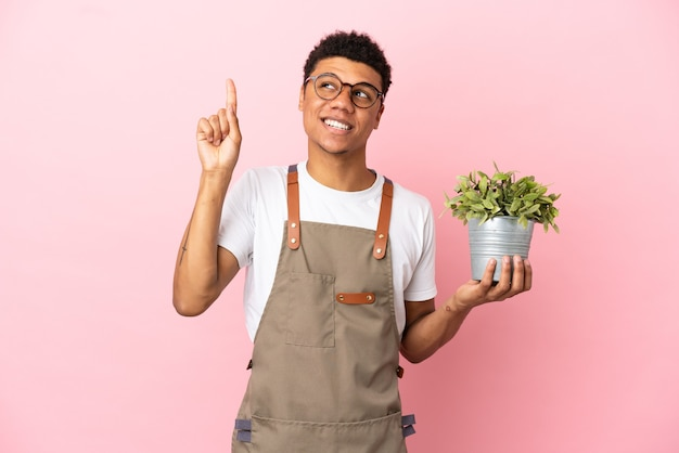 Ogrodnik afrykański mężczyzna trzymający roślinę odizolowaną na różowym tle wskazujący świetny pomysł