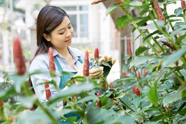 Ogrodnik cięcia kwiatów