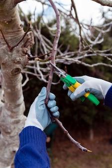 Ogrodnik cięcia suszonych gałęzi
