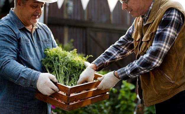 Ogrodnik daje organiczny świeży produkt rolny klientowi