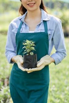 Ogrodnik gospodarstwa roślin