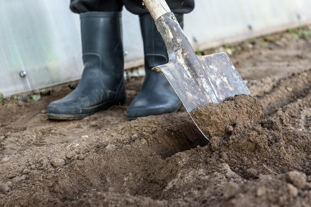 Ogrodnik kopie w ogrodzie. gleba przygotowuje się do sadzenia wczesną wiosną.