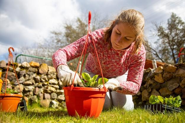 Ogrodnik n rękawiczki domowe sadząc kwiat w doniczce słoneczny dzień