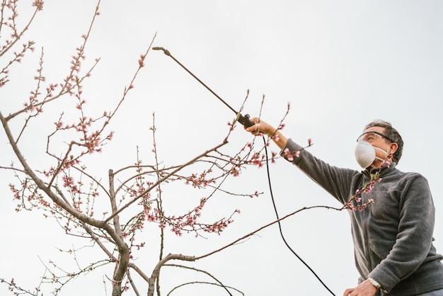 Ogrodnik opatrujący drzewo owocowe zraszaczem stojącym na drabinie w pochmurny dzień