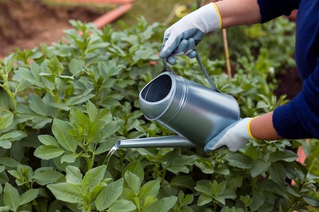 Ogrodnik pod wysokim kątem podlewania roślin