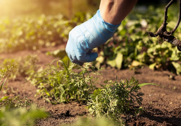 Ogrodnik pracujący w zielonym ogrodzie i wyrywający chwasty z gleby z bliska
