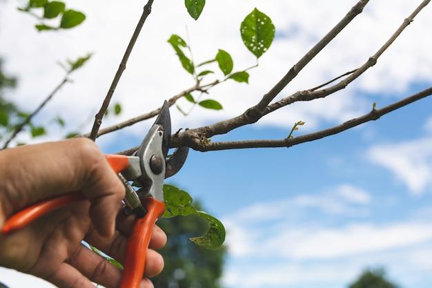 Ogrodnik przycina drzewa przy pomocy sekatora na naturze