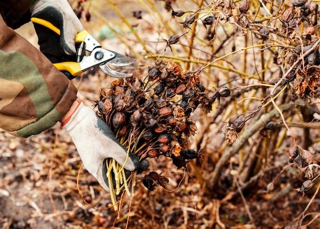 Ogrodnik przycinanie suchych gałęzi.