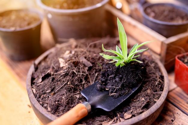 Ogrodnik sadząc drzewo i rosnąc. przyroda i środowisko hobby w ogrodnictwie domowym. relaks i rekreacja podczas wiosennych zbiorów w domu.