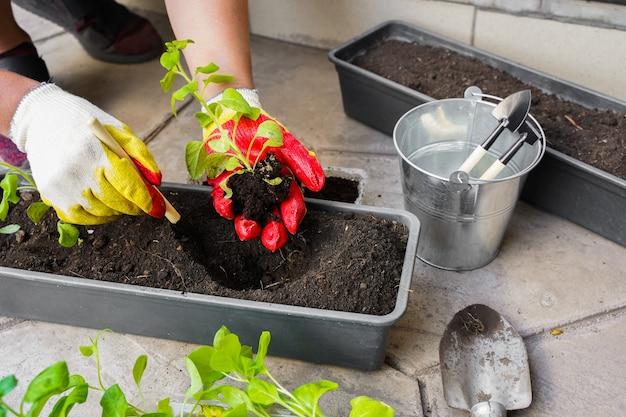 Ogrodnik sadzenie doniczkami narzędzia kobieta ręczne sadzenie kwiatów petunie latem ogród w domu na zewnątrz koncepcja ogrodnictwa i kwiatów ogrodnik sadzenie doniczkami narzędzia