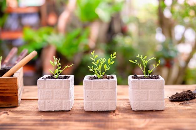 Ogrodnik sadzenie drzewa i wzrost. przyroda i środowisko hobby w ogrodnictwie domowym. relaks i rekreacja podczas wiosennych zbiorów w domu.