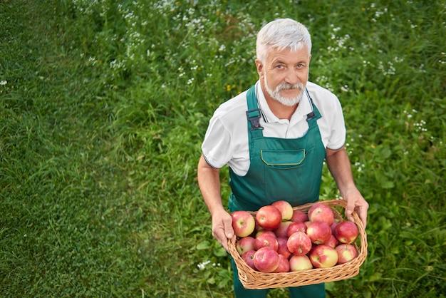 Ogrodnik trzyma kosz pełen świeżych czerwonych jabłek i stoi na łasce.