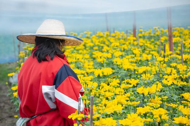 Ogrodnik utrzymujący kwiat nagietka w polu