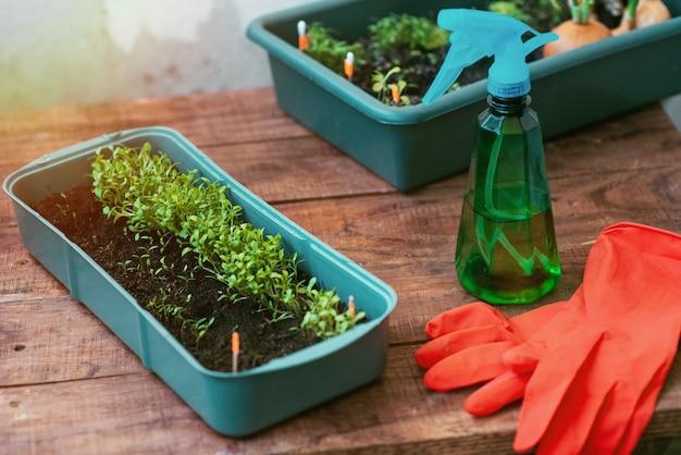 Ogrodnik w rękawiczkach opiekuje się sadzonką, która rośnie na oknie. produkt przyjazny dla środowiska!