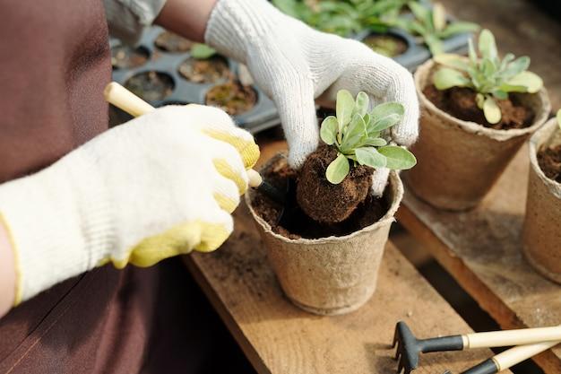 Ogrodnik w rękawiczkach z ręcznym narzędziem do przesadzania sadzonek kwiatów