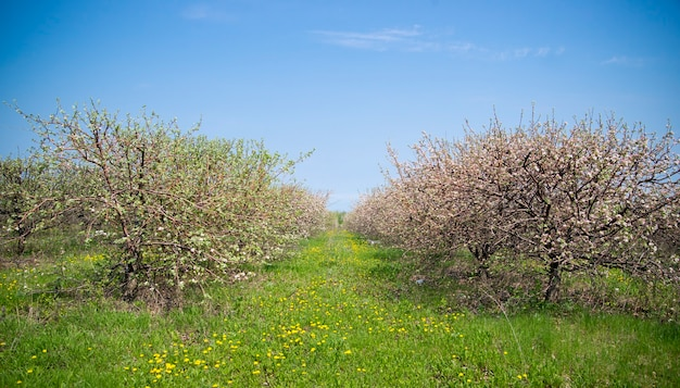 Ogrody kwitnące wiosną