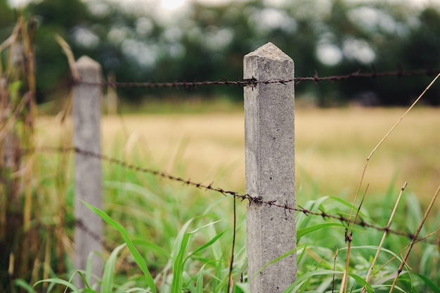Ogrodzenie z drutu kolczastego i wiejski trawnik lub zagroda dla zwierząt gospodarskich z bokeh rozmycie tła natury.