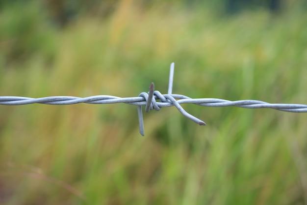 Ogrodzenie z drutu kolczastego i zielone pole zbliżenie