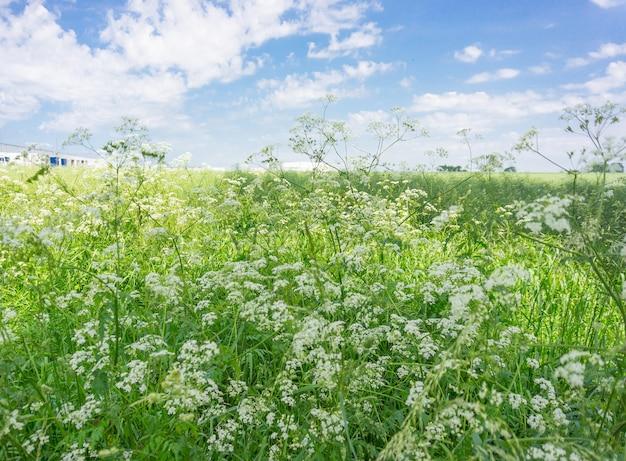 Ogromne zielone pole z polnymi kwiatami w ciągu dnia