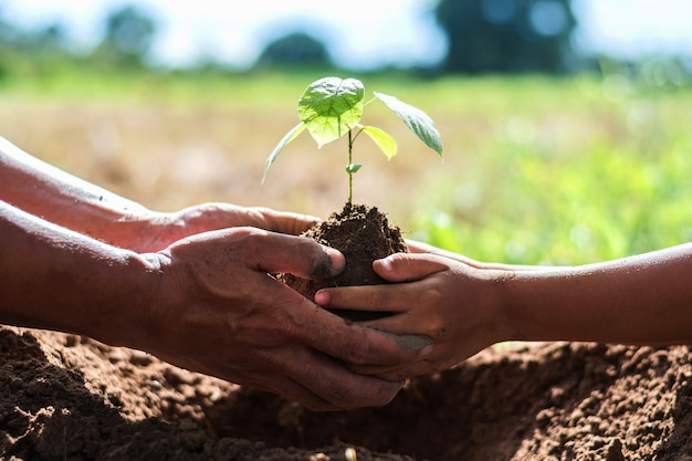 Ojciec i dzieci pomagają sadzić drzewa, aby zmniejszyć globalne ocieplenie.