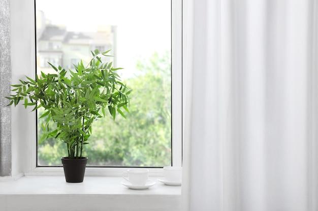 Okno z pięknymi białymi zasłonami i rośliną doniczkową na parapecie